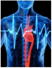 Български открития - Шестият сърдечен тон